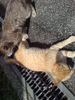 癒し系ネコ「萌え」番外編1