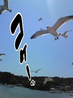 メンチをきる鳥