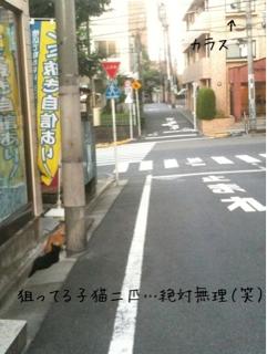 志しがめちゃめちゃ高ーーーい猫たち(=´∀`)人(´∀`=)