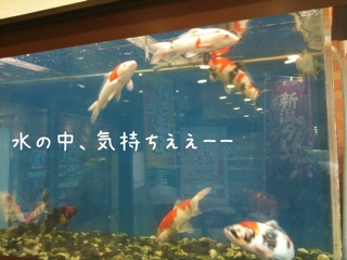 信濃川をバックに、はしゃぐ寝起きのおじさん