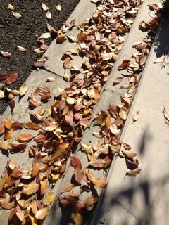 落ち葉いっぱいー