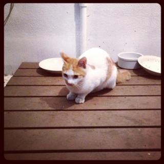 満腹な猫♪( ´▽`)