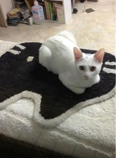 めちゃガンつけられた、猫(# ゚Д゚)