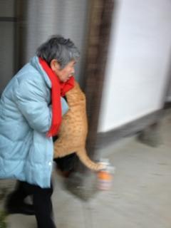 愛とエサを注がれ…デブ猫にヾ(・ω・`;)ノぁゎゎ