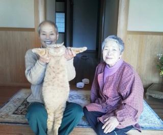 うちのデブ猫の衝撃の写真がお姉ちゃんから送られてきたぞっ!ヒイィィィ!!!!Σ(゚ロ゚ノ)ノ