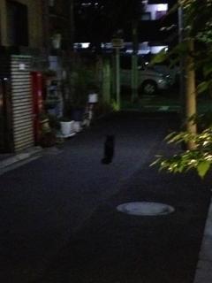 猫真っしぐら過ぎてカメラに全くおさまらない(゚Д゚)