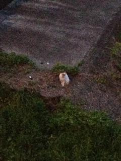 川辺でたそがれていらっしゃる猫に心奪われ、危うく遅刻しそうになるっつうの(´・ω・`;)